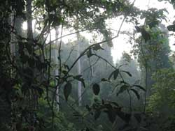 Dense jungle in Khao Yai National Park