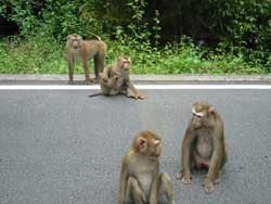 Cheeky little monkeys in Khao Yai National Park